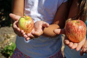תזונה אצל ילדים: המדריך המלא להורים
